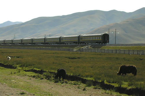 Tibet train passing harmonious nature